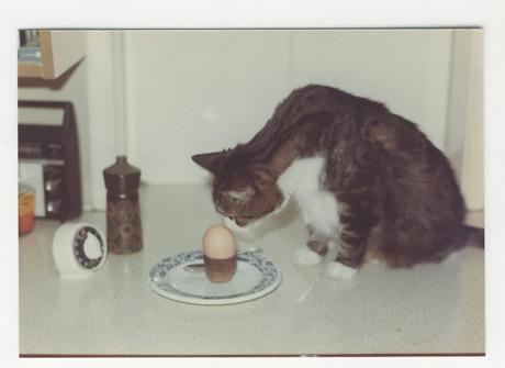 Mog and an egg